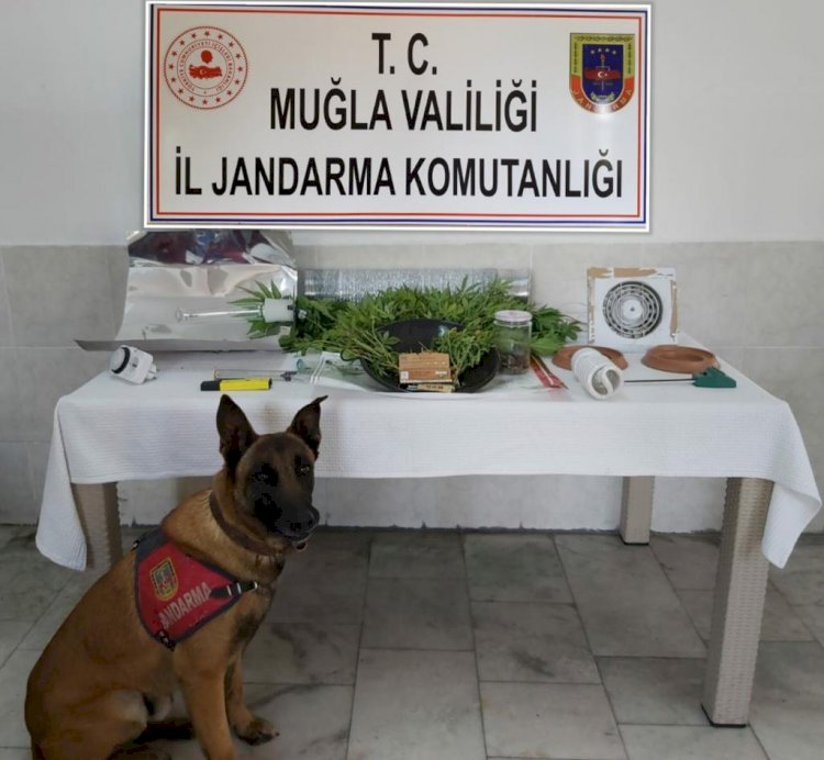 Jandarmadan Uyuşturucu Kaçakçılarına Operasyon
