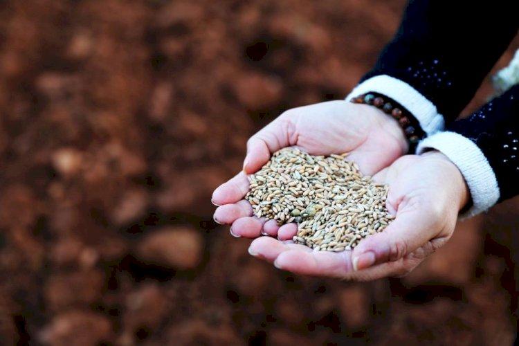 Bodrum'a Yerel Tohum Merkezi Kuruluyor