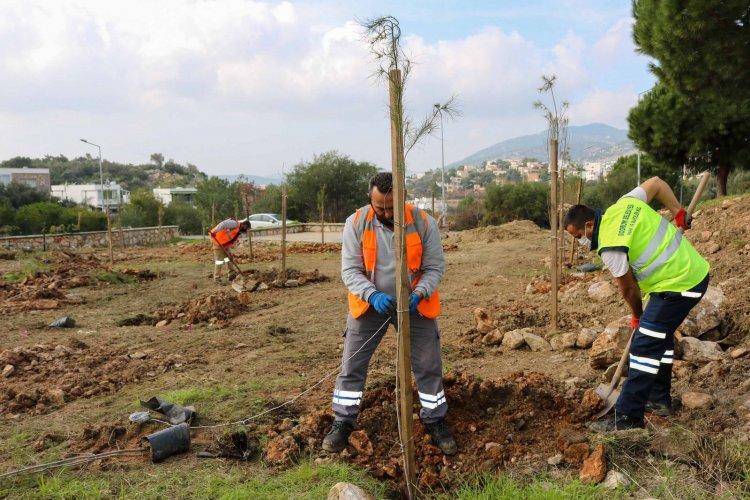 Bodrum Belediyesi'nden Fidan Ve Ağaç Dikimi