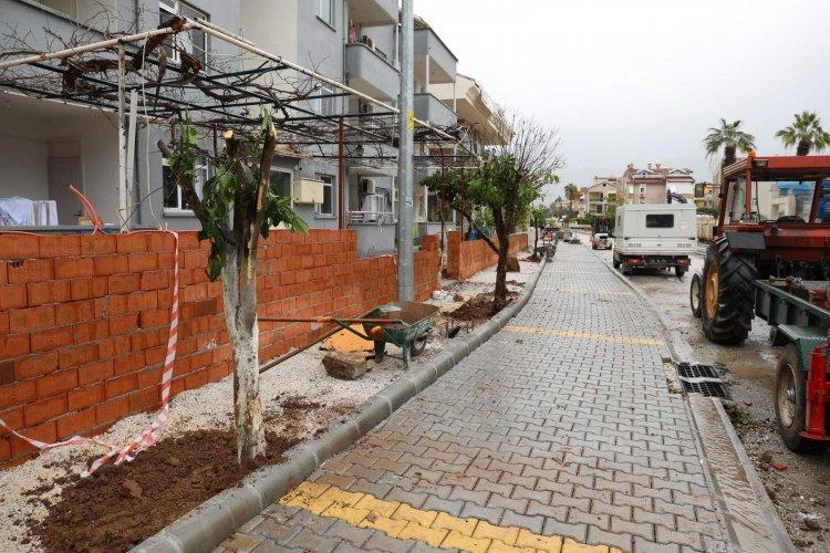 Turunç Ağaçları Geri Dikiliyor